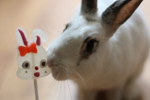 Our own Malteser Bunny